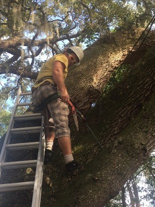 Man Working in Tree