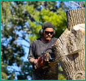 About Us | Affordable Arbor Care | Orlando tree service
